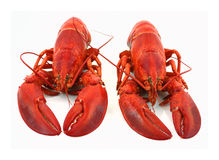 Nice close view lobsters. A great view of lobsters and the difference in claws stock images