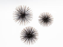 Nice closeup view of beautiful decorated sea urchins isolated on white Royalty Free Stock Image