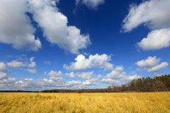Nice clouds in blue sky oveg yellow meadow Royalty Free Stock Images