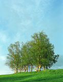 Nice clump of trees and grass. Nice clump of green trees, fresh grass and blue cloudy sky Stock Photography