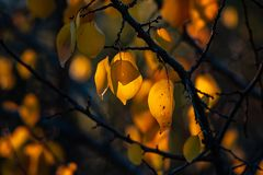 Nice color autumn leaves nature light sunny day royalty free stock photo