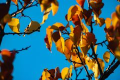 Nice color autumn leaves nature light sunny day royalty free stock photography