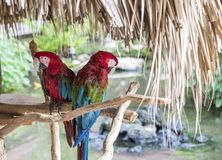 Nice colored parrots are sitting on the bough.  Stock Photos