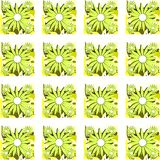 Nice Colorful background with daisies. Floral background with colorful daisies Stock Image