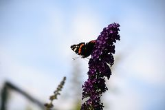 Nice colorful butterfly on the summer flower in my garden Royalty Free Stock Images