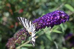 Nice colorful butterfly on the summer flower in my garden Stock Photography