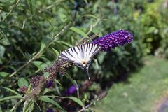 Nice colorful butterfly on the summer flower in my garden Stock Images