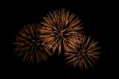 Nice colorful  Fireworks in the black sky. Main color is red tone Stock Image