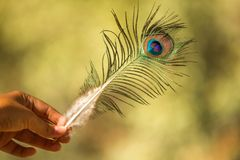Nice colorful peacock feather with blurry backgroung. Nice peacock feather with blurry backgroung in hand stock photography
