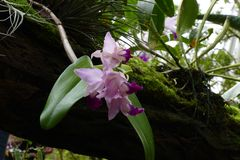 Nice colorfull orchidea floret. With leaf stock images
