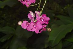 Nice colorfull orchidea floret. With leaf royalty free stock photos