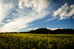 Nice day. A nice afternoon in my neighbourhood. County Ansbach, Bavaria, Germany Royalty Free Stock Images