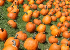 Nice day to choose your pumpkin Royalty Free Stock Photography