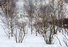 Zaryadye Nature-Landscape Park; Royalty Free Stock Photography