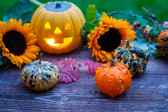 A nice decorative pumpkins on rustic background Royalty Free Stock Photography