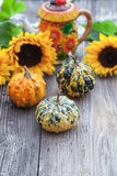 A nice decorative pumpkins on rustic background Stock Photography