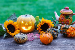 A nice decorative pumpkins on rustic background Stock Images