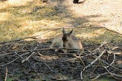 Nice deer Royalty Free Stock Images