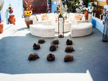 Nice dekorerade trädgården i Oia Santorini Royaltyfria Bilder