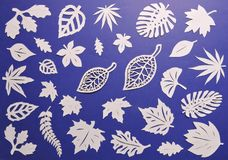 Beautiful leaves cut from white paper Stock Photos