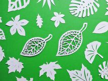 Beautiful tree leaves cut from white paper stock photography
