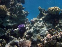 Nice different shape coral reefs in red sea, Egypt royalty free stock images