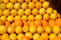 A nice display of rows of oranges & lemons in Portland, Oregon. Rows of ripe lemons and oranges on display in Portland, Oregon royalty free stock image