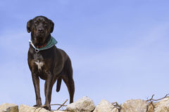 Nice dog. A nice dog looking at you on a beautiful sky Stock Photography