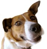 Nice dog Royalty Free Stock Photos