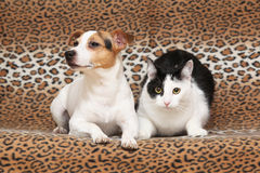 Nice dog with cat together on blanket. Nice dog with cat lying together on blanket Royalty Free Stock Photo