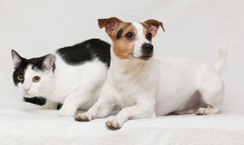 Nice dog with cat together on blanket Royalty Free Stock Photography