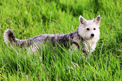 Nice dog in the grass Stock Images