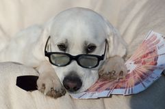 Nice dog with money. Funny dog and his money Royalty Free Stock Photo