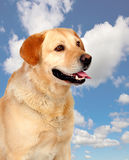 Nice dog outside Royalty Free Stock Image