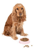 Nice dog with pink bowl Royalty Free Stock Images