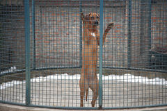 Nice dog standing on his feet in a cage Royalty Free Stock Photos
