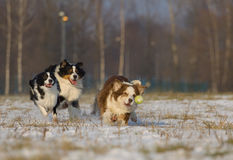 Nice dogs playing Stock Photos