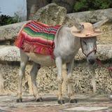Nice donkey! Stock Photo