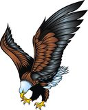 Nice eagle isolated Stock Images