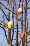 Nice Easter eggs decoration Royalty Free Stock Image