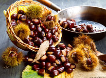 Nice edible chestnuts. Some nice edible chestnuts on wood Stock Image