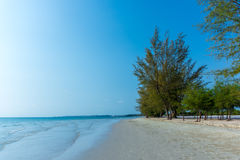 Nice empty tree lined beach with calm sea. stock photography
