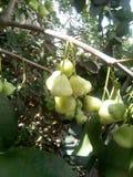 Nice en mooie boom en vruchten stock afbeelding