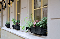 Nice european cafe exterior. Flowers on the window in the restaurant Royalty Free Stock Photos