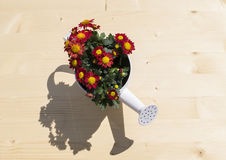 Nice ewer with flowers and shadow Stock Photos