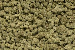 Nice Example of Indica dominate Hybrid weed. Very nice Image of a pile of professionally cured and trimmed marijuana Stock Photography