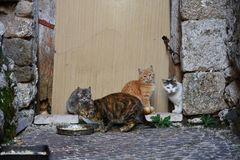 A nice familiy of cats. stock photo