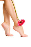 Nice feet and flower. Royalty Free Stock Photo