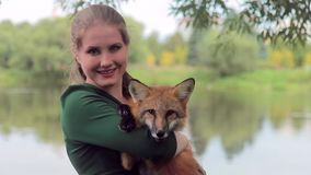 Nice female holds fox in hands, photographed with wild animal outdoors stock video