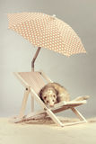 Nice ferret female portrait on beach chair in studio. Ferret portrait on beach chair in studio Stock Image